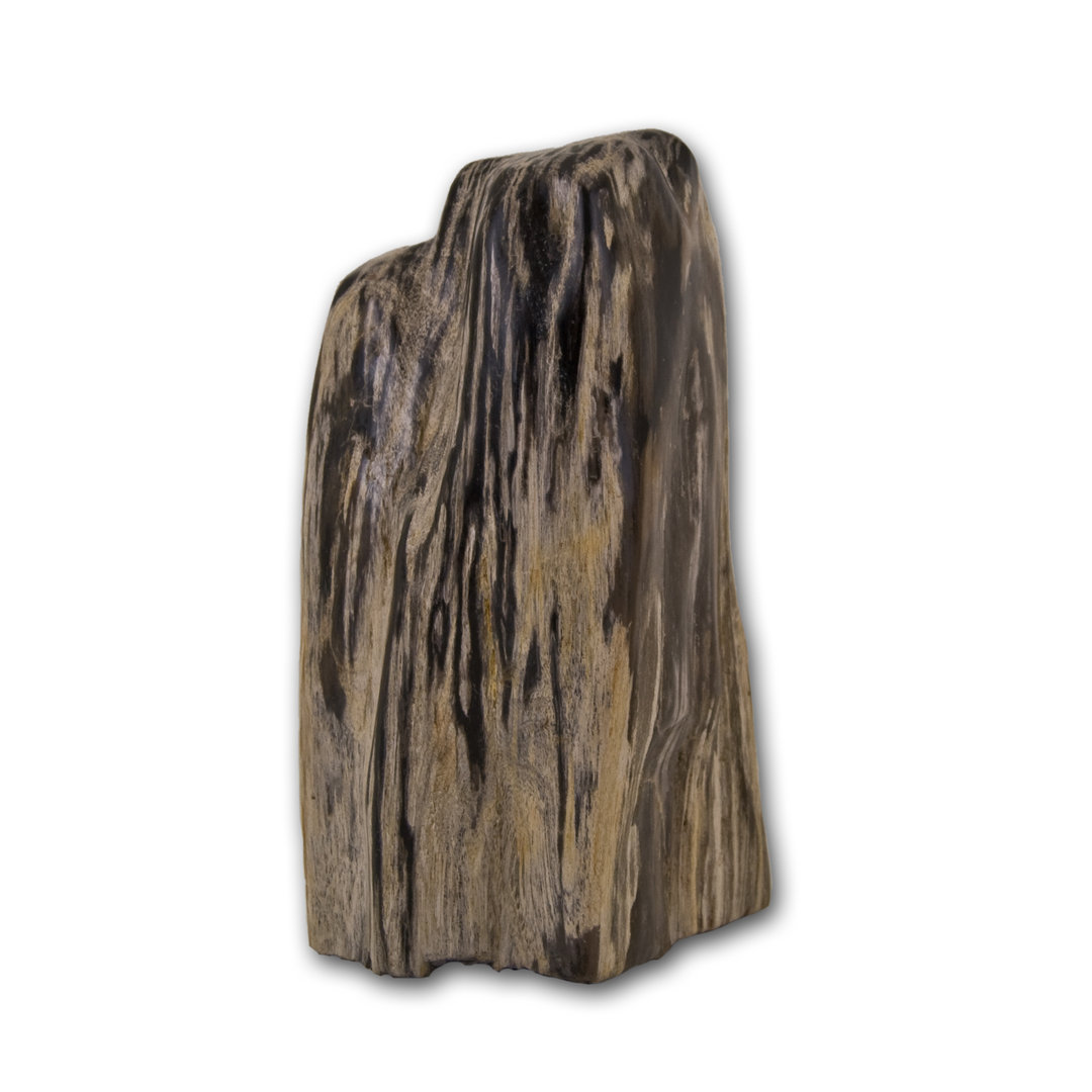 fossiles holz versteinertes holz versteinert anschliff poliert fossile skulptur ebay. Black Bedroom Furniture Sets. Home Design Ideas
